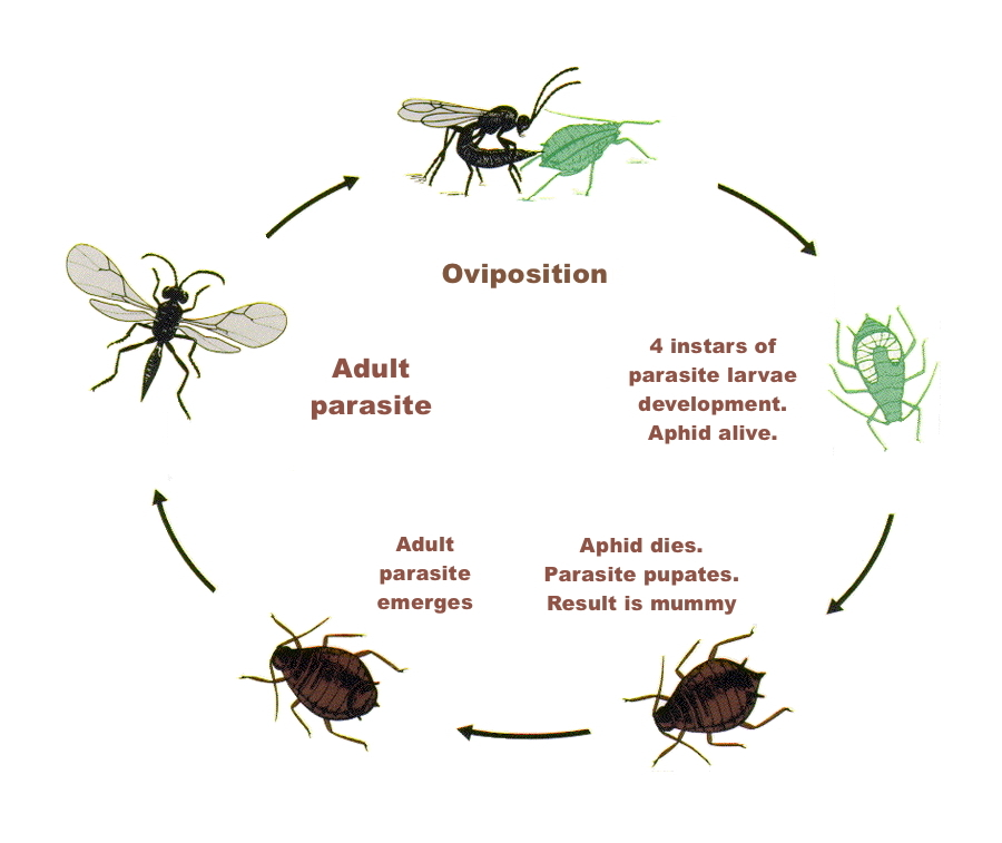 Www Natural Insect Control Com