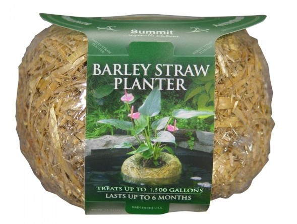 Barley Straw Planter Medium