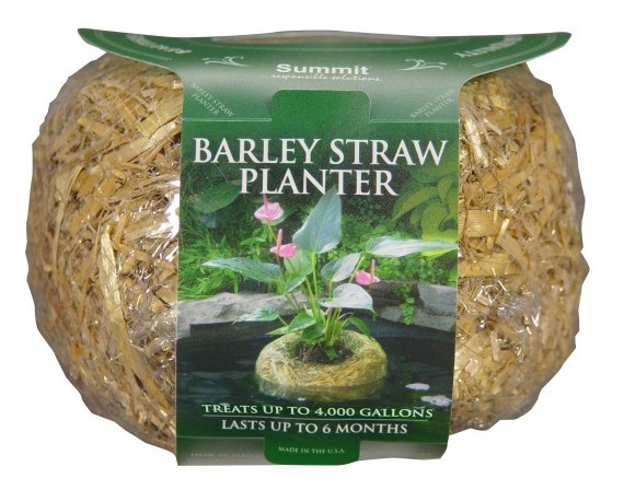 Barley Straw Planter Small