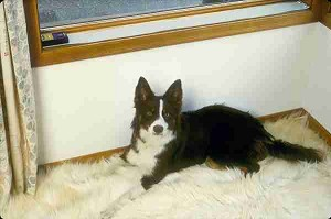 Scat Strip Extension - (46 inch x 3 inch)