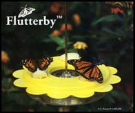 Flutterby Butterfly Feeder, 12/case
